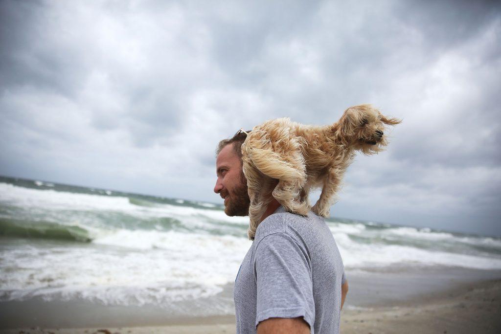Rückkehr von Haustieren nach einer Naturkatastrophe